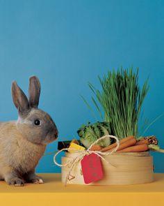 Bunny Gift Basket