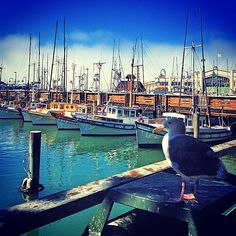 san francisco bay area // fisherman's wharf // pier 39