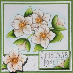 Colored with Spectrum Noir Alcohol Markers, Image by Crafter's Companion - Sheena Douglas Stamps - Christmas Rose