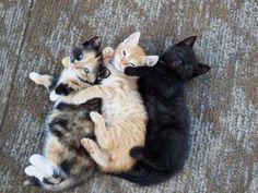 Three little cuties snuggling.