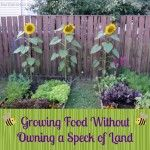 Growing Food Without Owning a Speck of Land
