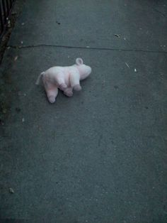 some piggies never make it home... #photograph