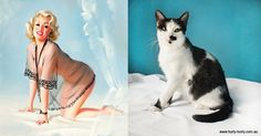 Cats That Pose Like Pin Up Girls - 5