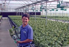 Hydroponic greenhouse basil from Eden Farms in Indiana...