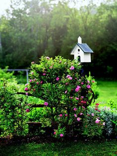 It's easy to make your garden into a more inviting place for birds and butterflies to gather.