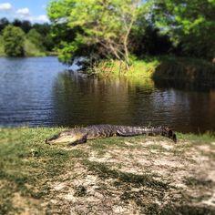 natur trail, alma mater, baughman center, colleg town, florida gator, university of florida campus