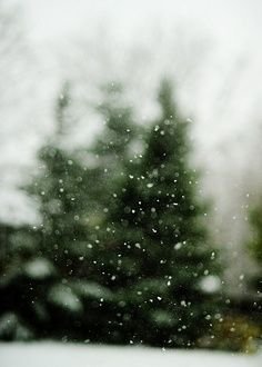 Snow falling on fir. Image via The Pioneer Woman. #terraingiftsandgreens