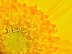 Bright Yellow #SephoraColorWash