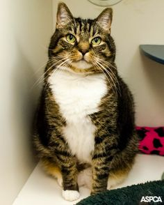 Gus is a shy, sensitive cat who's 7 years old who's looking for a peaceful home where he can be the only cat!