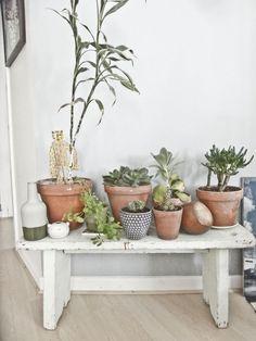#succulentes, #cactus, #green
