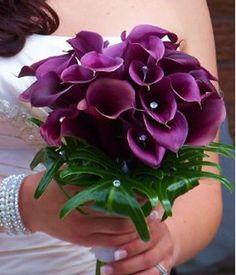Calla Lily purple!!!!