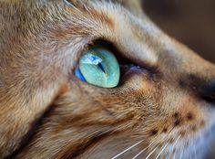gorgeous aqua eyes!
