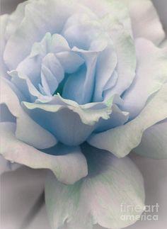 ✯ Baby Blue