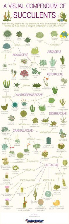 A Visual Compendium of Succulents plant, charts, visual compendium, cacti, yard, flora, garden, flower, cactus