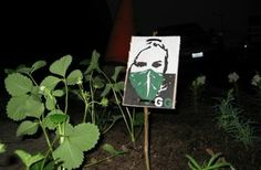 Guerilla gardening : Gardening used as an environmental action | Imagination For People