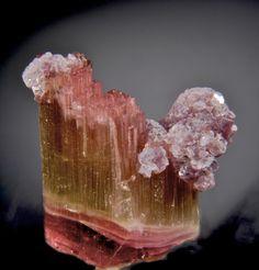 Elbaite and Lepidolite miner, gem grade, elbait, beauti purpl, himalaya, gemston, crystal, counti california, lepidolit