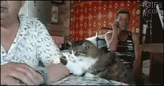 Yet another cat shows us humans how to do it. | The 15 Funniest Cat GIFs Of The Summer
