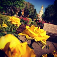 Another beautiful day at #Baylor University. (via bayloruniversity on Instagram)