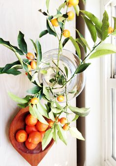 kumquats as 'decor'