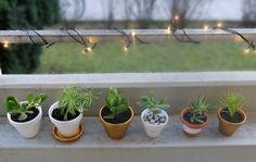 DIY Mini Plants