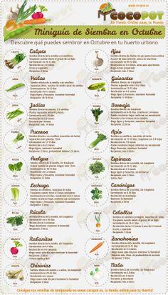 Miniguía de Siembra de semillas en octubre para Huertos. Todo el mundo a cultivar!