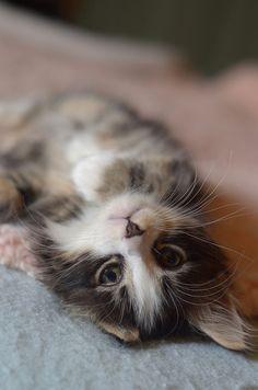 cuteness overload ...