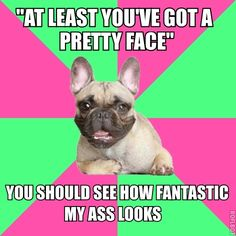 Fat Acceptance Frenchie