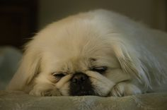 Sleepy Chyna by Steven Sobel, via Flickr