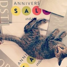 Pebbles the cat shopped the Nordstrom Anniversary Sale.