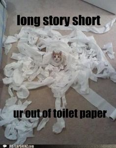 Hun! Cat got the toilet paper again!