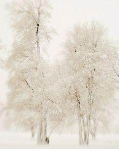 .frosty