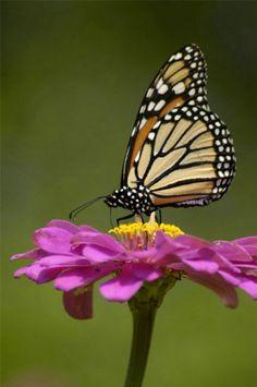 fotos de mariposas reales