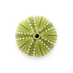 Sea Urchin No.2