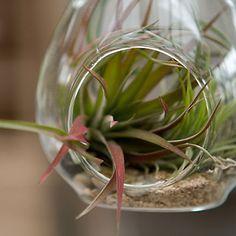 Terrain Drop Glass Terrarium