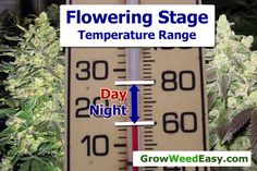 This diagram shows the optimal temperature range for the cannabis flowering stage.