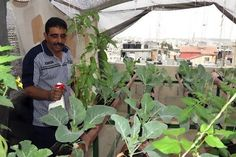 Rooftop farmer gardens provide food and hope for cash-strapped Palestinians - dakboer s..s ? Will most roofs support the weight and stress? Kpz