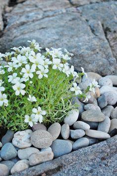 Rock garden ~