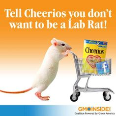 Tell Cheerios you don't want to be a lab rat! Take action here: http://gmoinside.org/want-non-gmo-cheerios-just-fly-europe