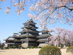 japanese architecture, matsumoto castl, cherri blossom, japan travel, cherry blossoms