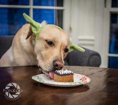 Brody's 5th Birthday | #ItsaLabThing