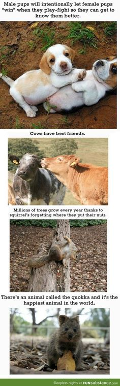 4 Animals Facts