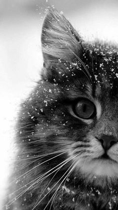 Kitty in the snow… ≧^◡^≦°