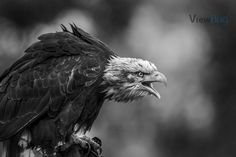 "Photo ""Screamer"" by DaGeo"