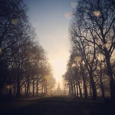 Morning mist rises in peaceful Green Park in #London 13°C | 55°F #BurberryWeather