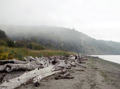 The Seattle Beach To Visit On a Rainy Day,