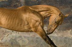 45. Akhal-Teke - Magnatli by Kerri-Jo, via Flickr