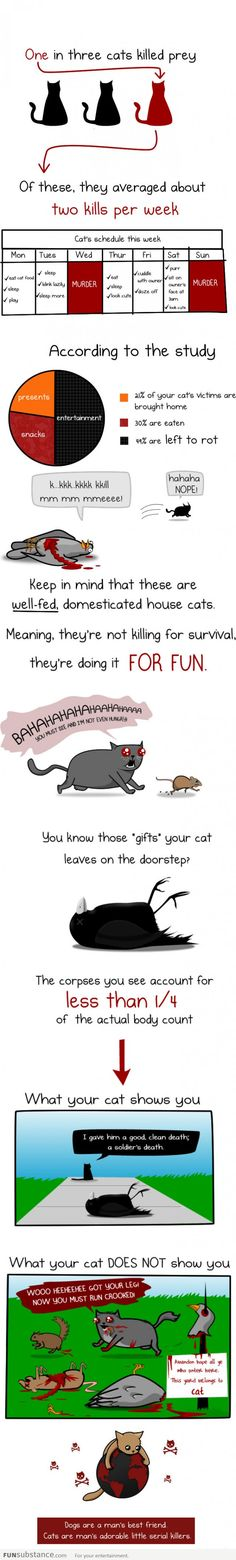 OMG this really made me laugh! This is soooo my sweet little grey girl! Ellie Mae, my little psychopath…...