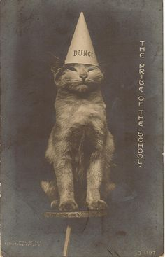 Cat and Dunce Cap