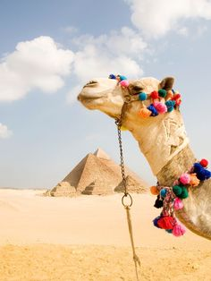 Traveling to Egypt?