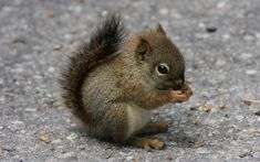 Little-Squirrel.jpg 2,880×1,800 pixels